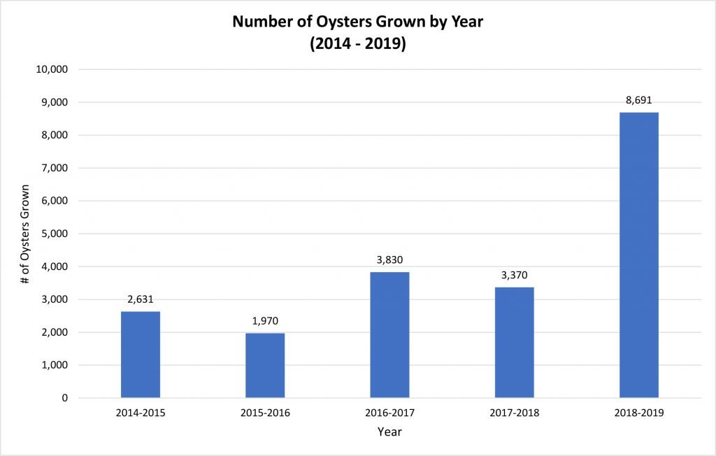 Number Of Oysters Grown By Year 2014 2019